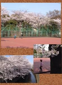 写真 2014-04-01 19 25 39